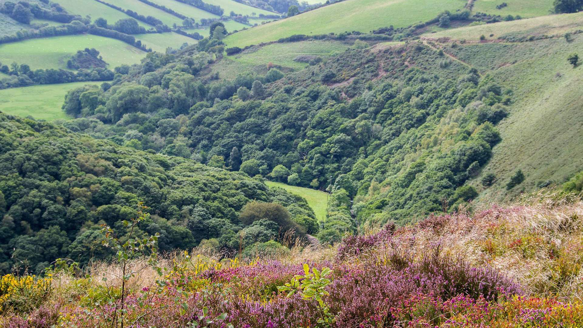 Exmoor - The Luttrell Arms Hotel